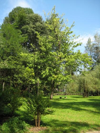 Greenery in Vrelo Bosna natural park